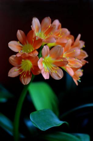 Mudder's Flower 1